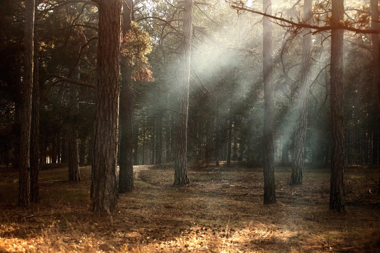 Massivholz als Klimaretter